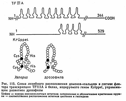 факторыСхема линейного
