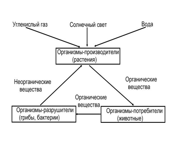 Схема круговорота жизни на