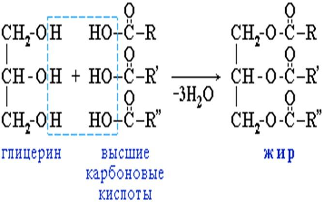 Схема образования триглицерида