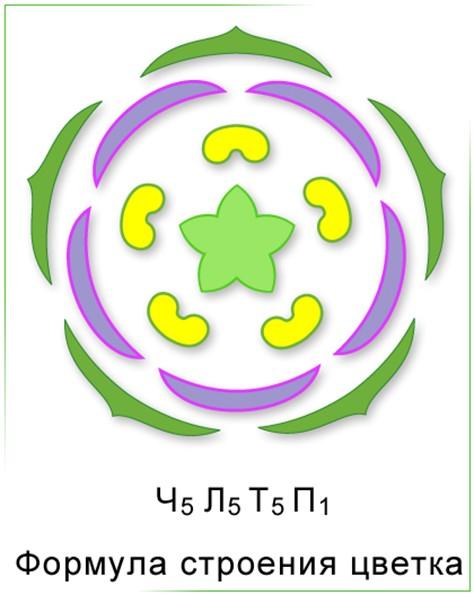 диаграмма розоцветные