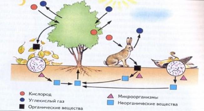 схем)Схема биологического