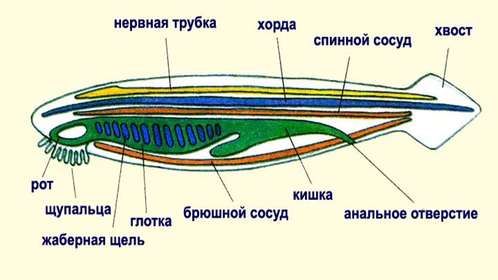Схема общего плана строения