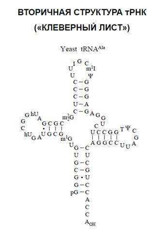 Участники биосинтеза белка