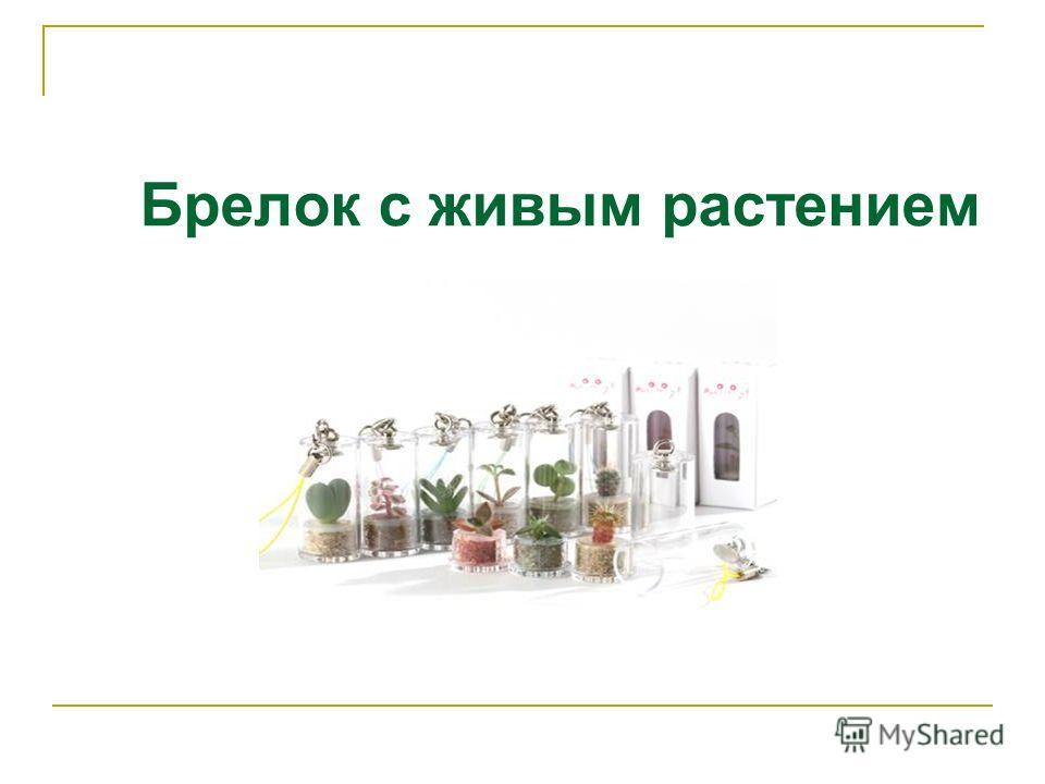 """Живой брелок """"Миникактус"""" или pet plant ,Pet Tree Slide_1"""