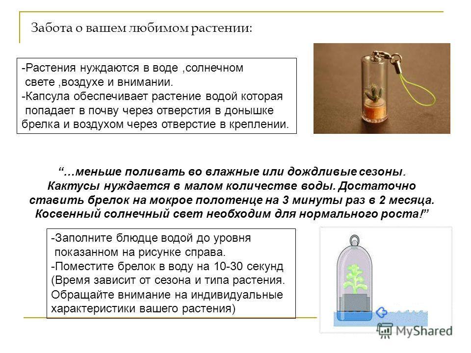 """Живой брелок """"Миникактус"""" или pet plant ,Pet Tree Slide_3"""