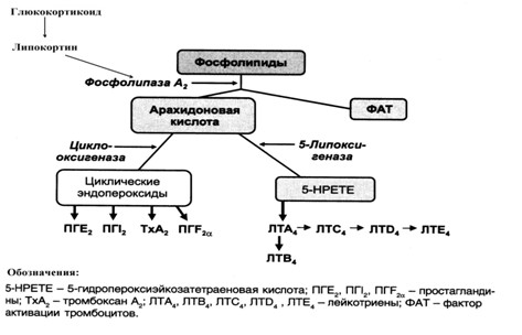 метаболизм арахидоновой