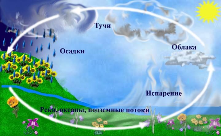 Схема круговорота воды
