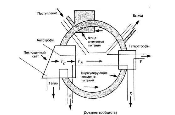 Биогеохимический цикл (кольцо)