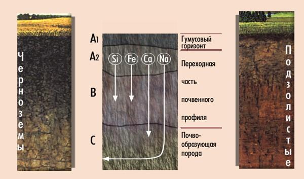 Строение почв