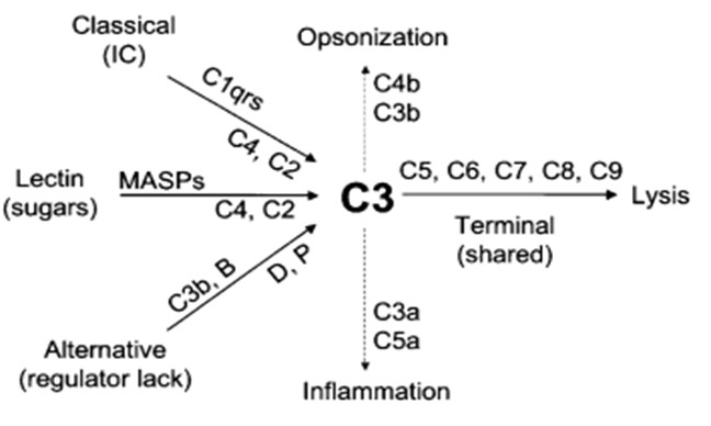 Схема путей активации