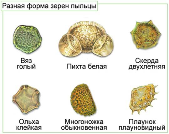 Биология 7 класс генеративные органы