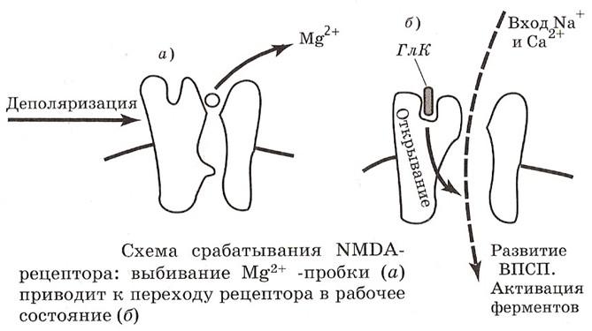Механизм работы