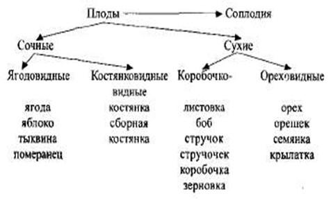 E:ДокументыМОРФОЛОГИЯ-курс