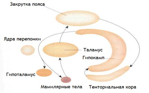 CONFERENCE OF MICROBIOLOGY
