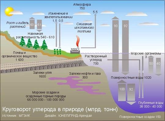 •Круговорот углерода