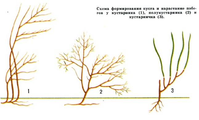 Схема формирования куста и