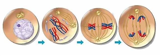 На схеме показана клетка
